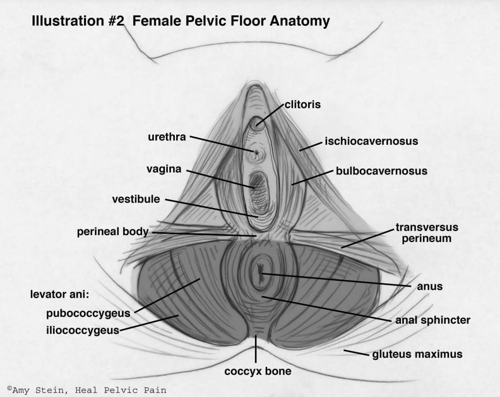 pelvicfloor
